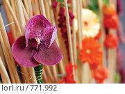 Купить «Фиолетовая орхидея (фокус на орхидее)», фото № 771992, снято 22 сентября 2007 г. (c) Ольга Харламова / Фотобанк Лори