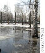 Деревья, стоящие в талой воде. Стоковое фото, фотограф Грубова Наталья / Фотобанк Лори