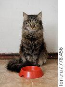 Купить «Голодная кошка», фото № 778456, снято 20 марта 2009 г. (c) Пантюшин Руслан / Фотобанк Лори
