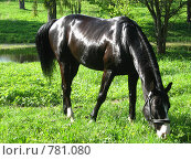 Конь. Стоковое фото, фотограф St.Tatyana / Фотобанк Лори