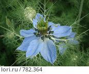 Цветок. Стоковое фото, фотограф Евгения Ерыкалина / Фотобанк Лори