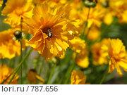 Цветы на ветру. Стоковое фото, фотограф Дмитрий Левченко / Фотобанк Лори