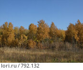 Золотая роща. Стоковое фото, фотограф Антон Тимохин / Фотобанк Лори