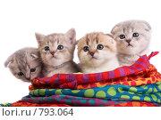 Котята в сумке. Стоковое фото, фотограф Cветлана Гладкова / Фотобанк Лори