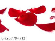 Купить «Красные лепестки розы на белом фоне», фото № 794712, снято 20 января 2008 г. (c) Петухов Геннадий / Фотобанк Лори
