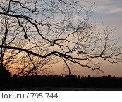 Купить «Ветви дерева», фото № 795744, снято 1 мая 2008 г. (c) Артём Дудкин / Фотобанк Лори