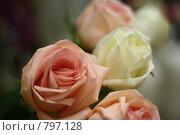 Купить «Розы», фото № 797128, снято 8 апреля 2009 г. (c) Вальченко Любовь / Фотобанк Лори