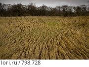 Купить «Сухая осенняя трава склоняется волнами от ветра», фото № 798728, снято 2 ноября 2008 г. (c) Петухов Геннадий / Фотобанк Лори