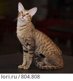 Купить «Кошка», фото № 804808, снято 11 апреля 2009 г. (c) Виктор Филиппович Погонцев / Фотобанк Лори