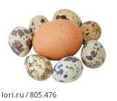 Перепелиные и куриные яйца. Стоковое фото, фотограф Косоуров Юрий / Фотобанк Лори