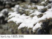 Ель в снегу. Стоковое фото, фотограф Дмитрий Левченко / Фотобанк Лори