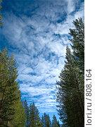 Синее небо с облаками между деревьев. Стоковое фото, фотограф Кекяляйнен Андрей / Фотобанк Лори
