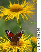 Купить «От солнца к солнцу», фото № 808296, снято 23 июля 2005 г. (c) Ирина Кожемякина / Фотобанк Лори