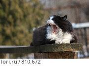 Купить «Кот», эксклюзивное фото № 810672, снято 14 апреля 2009 г. (c) Яна Королёва / Фотобанк Лори