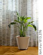 Купить «Растение в горшке», фото № 813376, снято 12 апреля 2009 г. (c) Литова Наталья / Фотобанк Лори