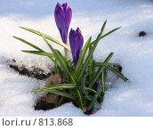 Купить «Подснежник», фото № 813868, снято 28 марта 2008 г. (c) Виктор Зандер / Фотобанк Лори