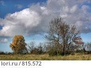 Купить «Деревья осени в облачном пейзаже», фото № 815572, снято 8 октября 2008 г. (c) Aleksander Kaasik / Фотобанк Лори