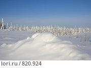 Купить «Снежный холм на фоне серебряных елей», фото № 820924, снято 13 марта 2009 г. (c) Анатолий Ефимов / Фотобанк Лори
