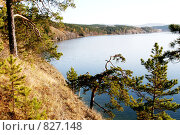 Сосна над озером Тургояк. Стоковое фото, фотограф Олег Прокопьев / Фотобанк Лори