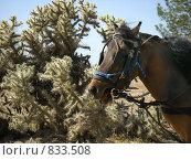 Купить «Заблудившийся пони», фото № 833508, снято 6 апреля 2008 г. (c) Shawn A. Nelson / Фотобанк Лори