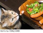 Голодный кот смотрит на еду. Стоковое фото, фотограф Beniamin  Gelman / Фотобанк Лори
