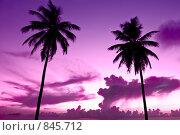 Купить «Две пальмы на фоне ночного неба», фото № 845712, снято 26 сентября 2008 г. (c) Александр Косарев / Фотобанк Лори