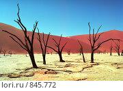 Купить «Пустыня Намиб», фото № 845772, снято 23 мая 2018 г. (c) Leksele / Фотобанк Лори