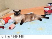 Кошка и ремонт (2008 год). Редакционное фото, фотограф Ольга Герасимова / Фотобанк Лори