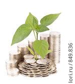Купить «Диаграмма роста из монет и молодой росток на белом фоне. Концепция роста вкладов», фото № 849836, снято 4 мая 2009 г. (c) Мельников Дмитрий / Фотобанк Лори