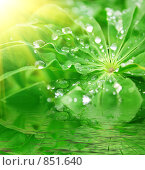 Лист с каплями воды после дождя в лучах солнца и его отражение. Стоковое фото, фотограф Анна Игонина / Фотобанк Лори