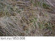 Купить «Прошлогодняя трава», фото № 853008, снято 8 мая 2009 г. (c) Наталия Печёрских / Фотобанк Лори