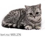 Кот. Стоковое фото, фотограф GaVrilin Ilya / Фотобанк Лори