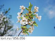Май. Стоковое фото, фотограф Денис Собкалов / Фотобанк Лори