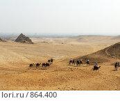 Купить «Плато Гиза. Египет», фото № 864400, снято 29 октября 2007 г. (c) Sergey Kohl / Фотобанк Лори