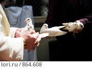 Купить «Свадебные голуби_2», фото № 864608, снято 25 апреля 2009 г. (c) Ирина Литвин / Фотобанк Лори