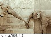Влюбленные слоны. Стоковое фото, фотограф Виктор Застольский / Фотобанк Лори