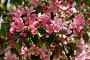 Яблоневые цветы, фото № 869880, снято 15 мая 2009 г. (c) Наталья Волкова / Фотобанк Лори