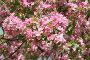 Яблоневые цветы, фото № 870132, снято 15 мая 2009 г. (c) Наталья Волкова / Фотобанк Лори