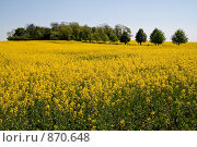 Купить «Рапсовое поле весной», фото № 870648, снято 2 мая 2009 г. (c) Архипова Мария / Фотобанк Лори