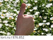 Рука. Стоковое фото, фотограф Liudmila Belyaeva / Фотобанк Лори