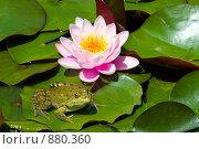 Купить «Лилия и лягушка», фото № 880360, снято 26 мая 2007 г. (c) Михаил Лукьянов / Фотобанк Лори