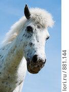 Купить «Белая лошадь», фото № 881144, снято 17 мая 2009 г. (c) hunta / Фотобанк Лори