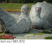Травяные голуби (2008 год). Редакционное фото, фотограф Павел Ардатий / Фотобанк Лори