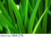 Купить «Трава», фото № 884776, снято 5 мая 2009 г. (c) Алексей Бугвин / Фотобанк Лори