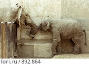 Слоновья любовь. Стоковое фото, фотограф Виктор Застольский / Фотобанк Лори
