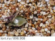 Жемчужина в раковине. Стоковое фото, фотограф Анна Мегеря / Фотобанк Лори