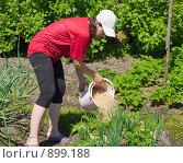 Купить «Мульчирование клубники опилками», фото № 899188, снято 30 мая 2009 г. (c) Денис Шароватов / Фотобанк Лори