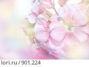 Купить «Нежный цветочный фон», фото № 901224, снято 30 мая 2009 г. (c) Анна Боровикова / Фотобанк Лори
