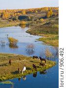 Купить «Пейзаж», фото № 906492, снято 2 октября 2008 г. (c) ВЛАДИМИР КУДРИНСКИЙ / Фотобанк Лори