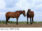 Купить «Лошади», фото № 907516, снято 6 июня 2009 г. (c) Яна Королёва / Фотобанк Лори